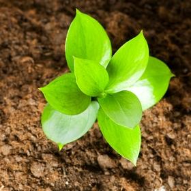 Кабмин поддержал законопроект о требованиях к органической продукции