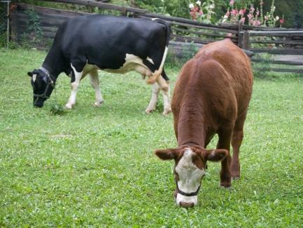 Депутаты хотят создать условия для развития семейного фермерства