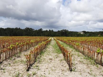 Сельхозпредприятие работает с давальческим сырьем: как составить расчет доли сельхозпроизводства