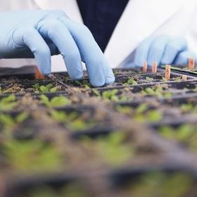 Сельхозпроизводителям утвердили форму заявления для внесения в Реестр получателей бюджетной дотации