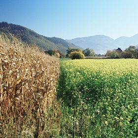 Правительство определилось, как дотировать сельхозпроизводителей
