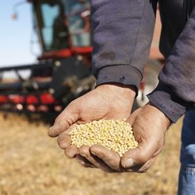 Истекает срок уплаты налога на прибыль сельхозпроизводителями