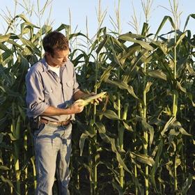 Налоговый кредит сельхозпроизводителя: особенности учета