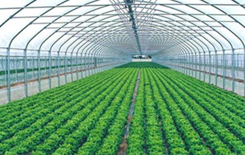 Украинская Фруктовая Компания запускает производство высококачественных овощей и зелени