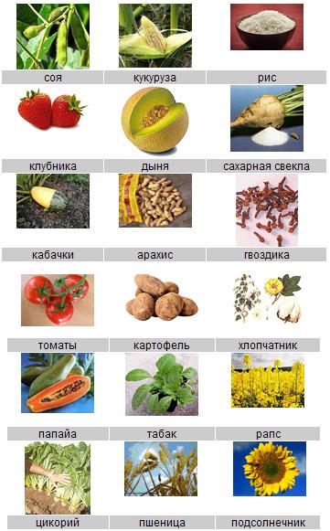 """Ряд продуктов предлагают избавить от надписи """"Без ГМО"""""""