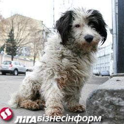 Собачья жизнь.... Sob_8_4_9