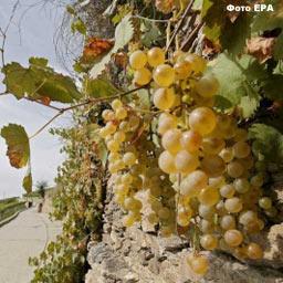 Парламент продлил действие сбора на развитие виноградарства
