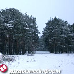 Цены на землю в Киеве и области продолжают расти